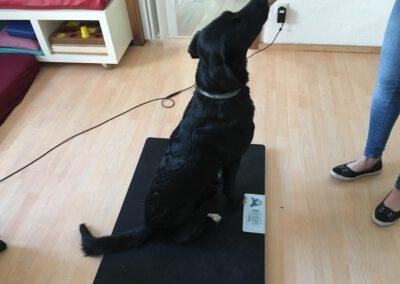 Hundephysiotherapie Tierheilpraxis Zauberhunde in Wilsdruff nahe Dresden Hundephysio