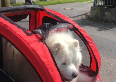 Hundewagen Ciyoshi Hundepension Hundephysio Wilsdruff