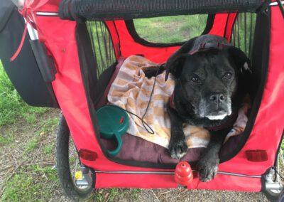 Wagen Hundephysio Hundephysiotherapie Tierheilpraxis Wilsdruff Dresden Zauberhunde