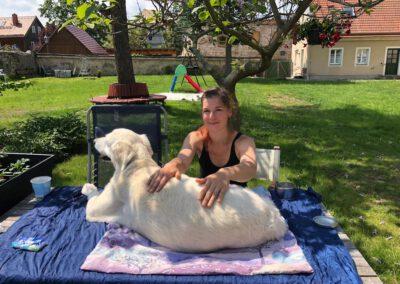 Massage Goldie und ich Mobile Hundephysiotherapie Tierheilpraxis Wilsdruff Zauberhunde