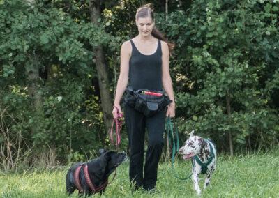 Leinenführigkeit Ich Hundetraining Hundephysio Tierheilpraxis Wilsdruff