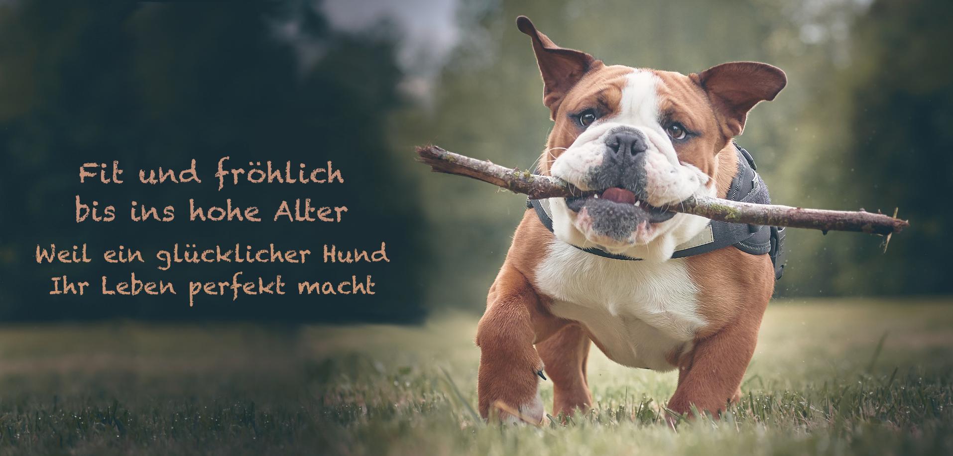 Gute Fette in der Hundeernährung Hundeernährungsberatung Wilsdruff Dresden Zauberhunde
