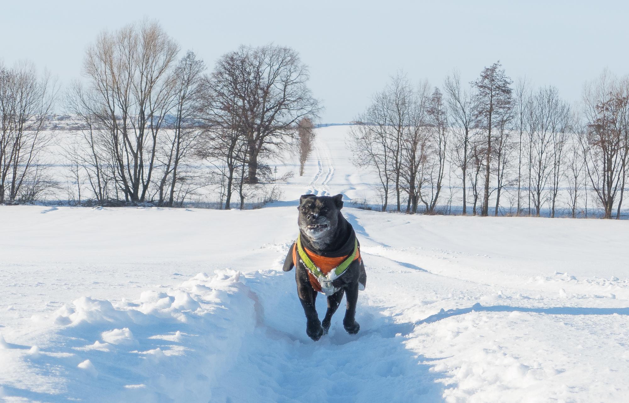 HappySchnee hund rennt