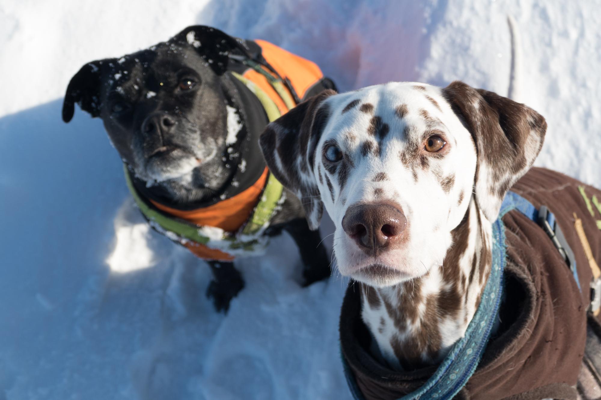 Hundemantel Zauberhunde Carnivorus Hundephysiotherapie Tierheilpraxis