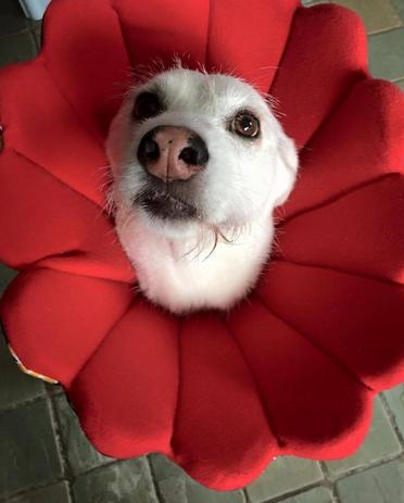 Geschenkideen für Hundebesitzer Bloomy Tierschutzkragen Operation Hundephysiotherapie Zauberhunde Praxis für Hunde