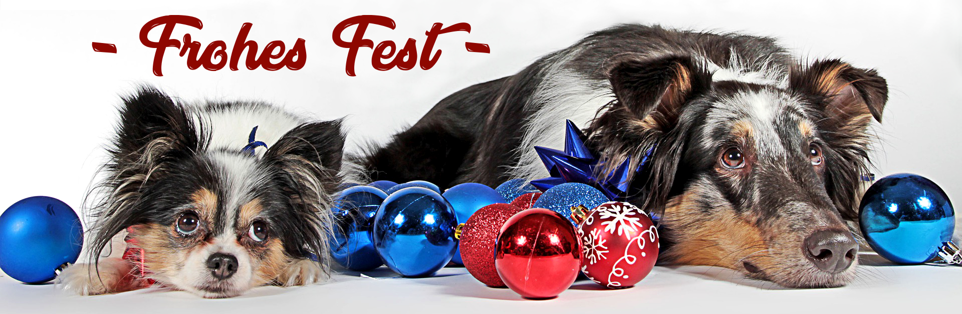 Frohes Fest Zauberhunde Hundephysio Wilsdruff