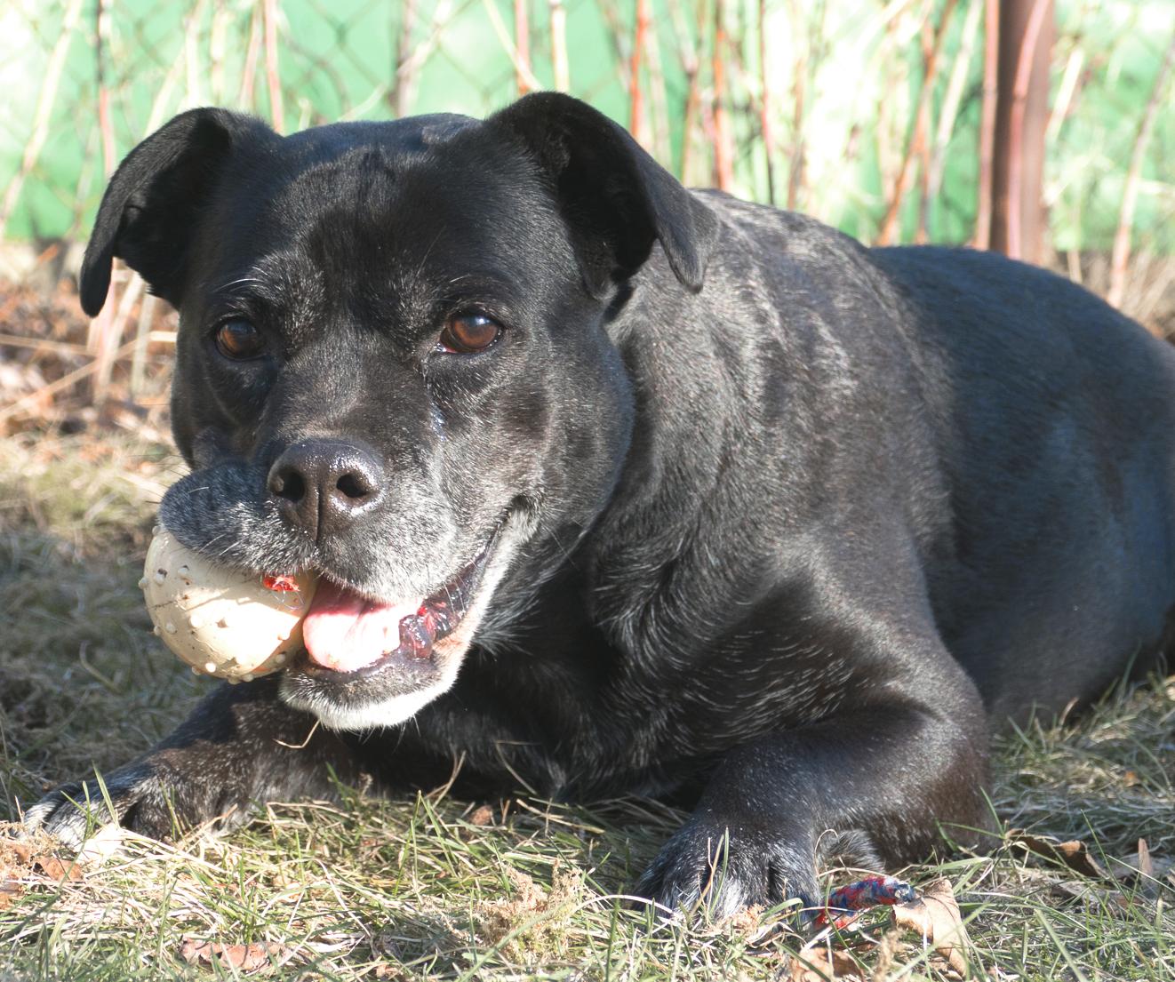 Arthrose Tierkrankenversicherung Agila Hundephysiotherapie Wilsdruff Zauberhunde