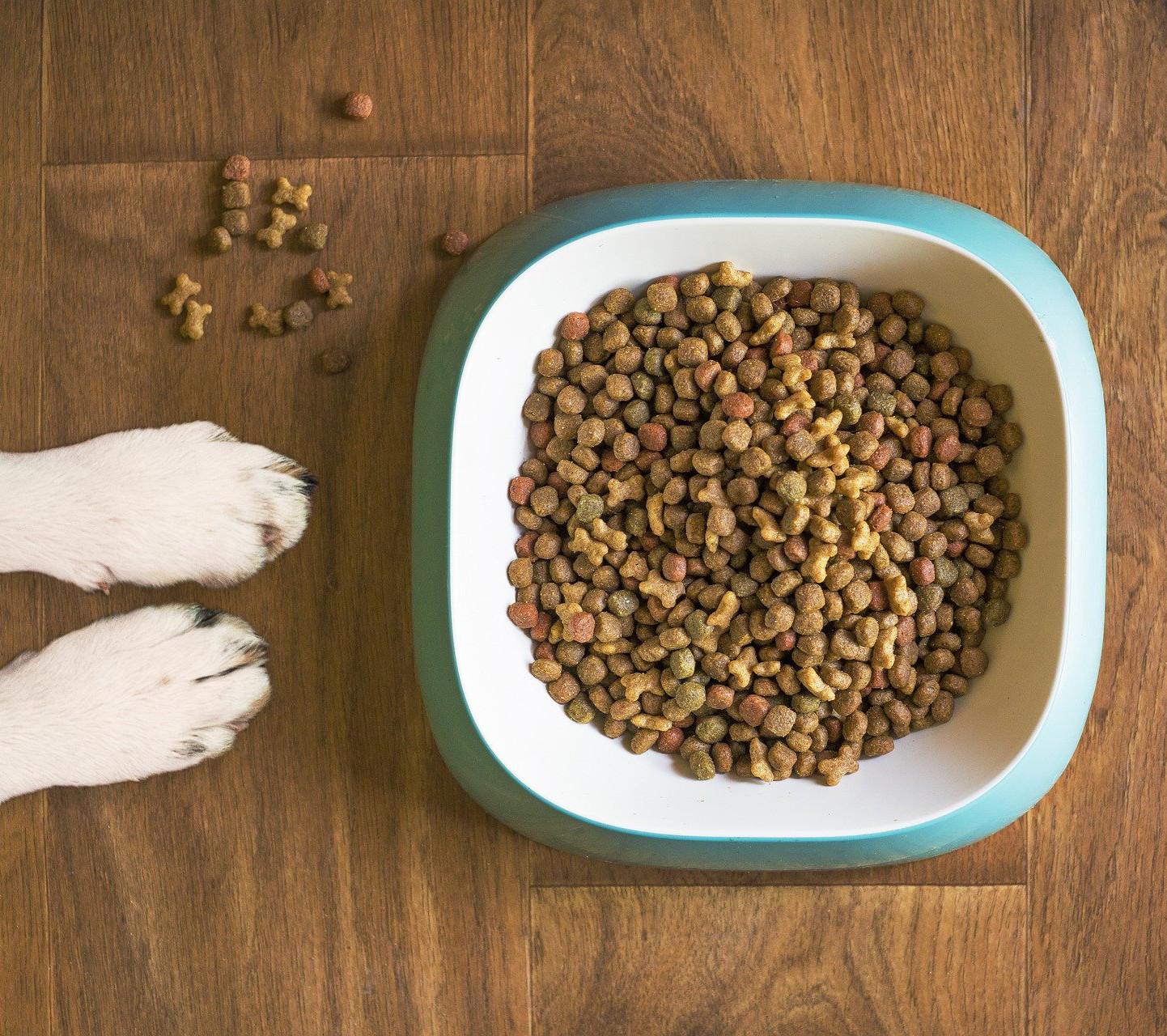 Hundefutter Ernährungsberatung