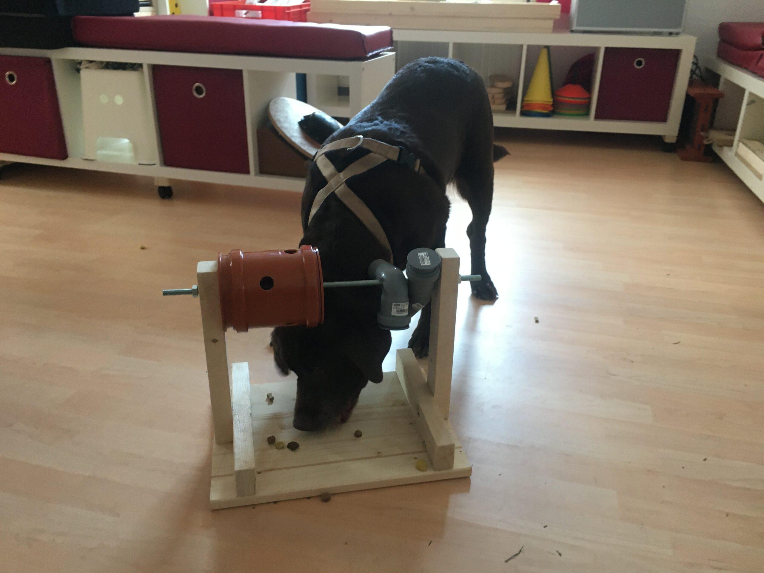 Hund Denkspiel selber bauen Beschäftigung Hundeschule Wilsdruff Zauberhunde 3