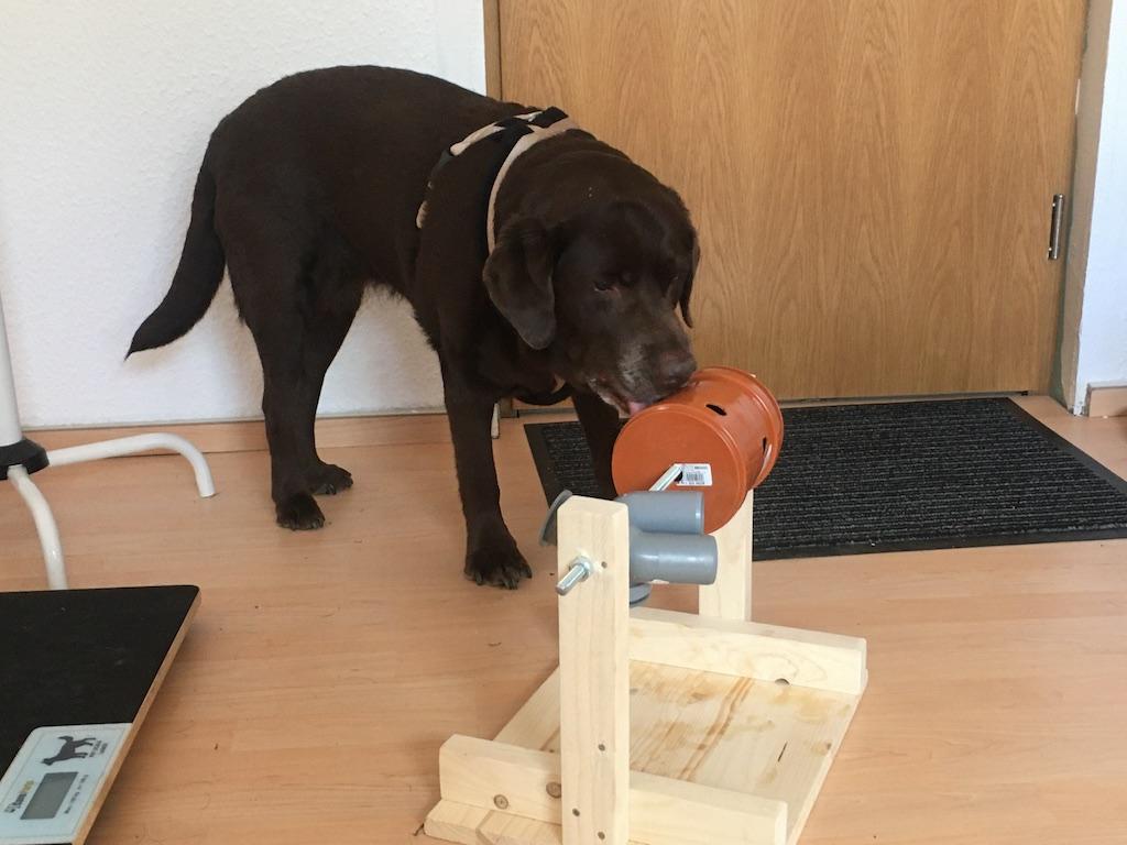 Denkspiel selber bauen Intelligenzspielzeug für Hunde Dresden Zauberhunde