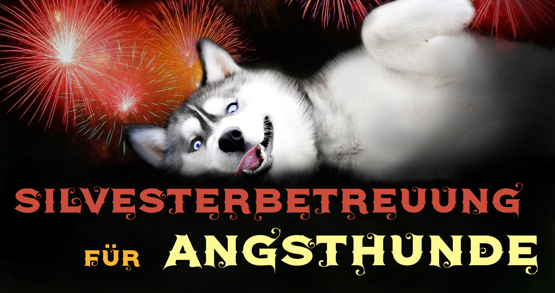 Hundebetreuung an Silvester Wilsdruff Zauberhunde