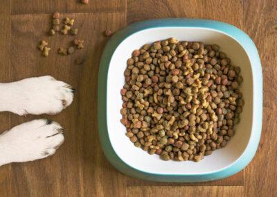 Trockenfutter Hundeernährungsberatung Zauberhunde Wilsdruff Dresden