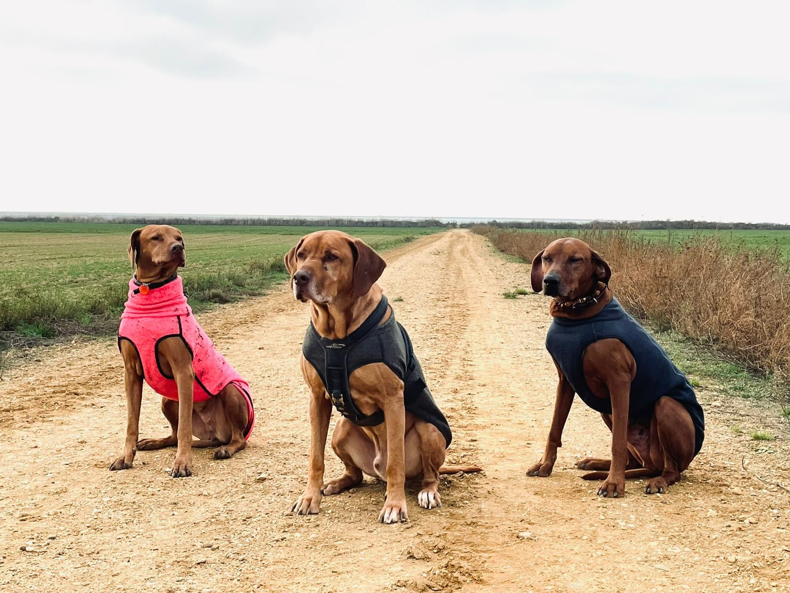 Ridgebacks mit Hundemantel Hundemantel Wirbelsäule Hundephysiotherapie Heidi Schunck Carnivorus Zauberhunde Vivien Wittig
