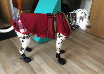 Lucky Pfotenschuhe Hundetraining Wilsdruff Zauberhunde