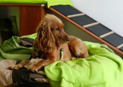 Hunderampe Sofa Hundepension Zauberhunde Wilsdruff