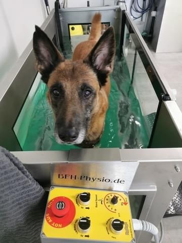 Unterwasserlaufband für Hunde Hundephysiotherapie Zauberhunde Wilsdruff 1