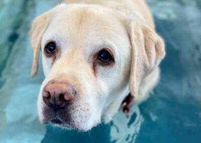 Unterwasserlaufband für Hunde Hundephysiotherapie Zauberhunde Wilsdruff 2