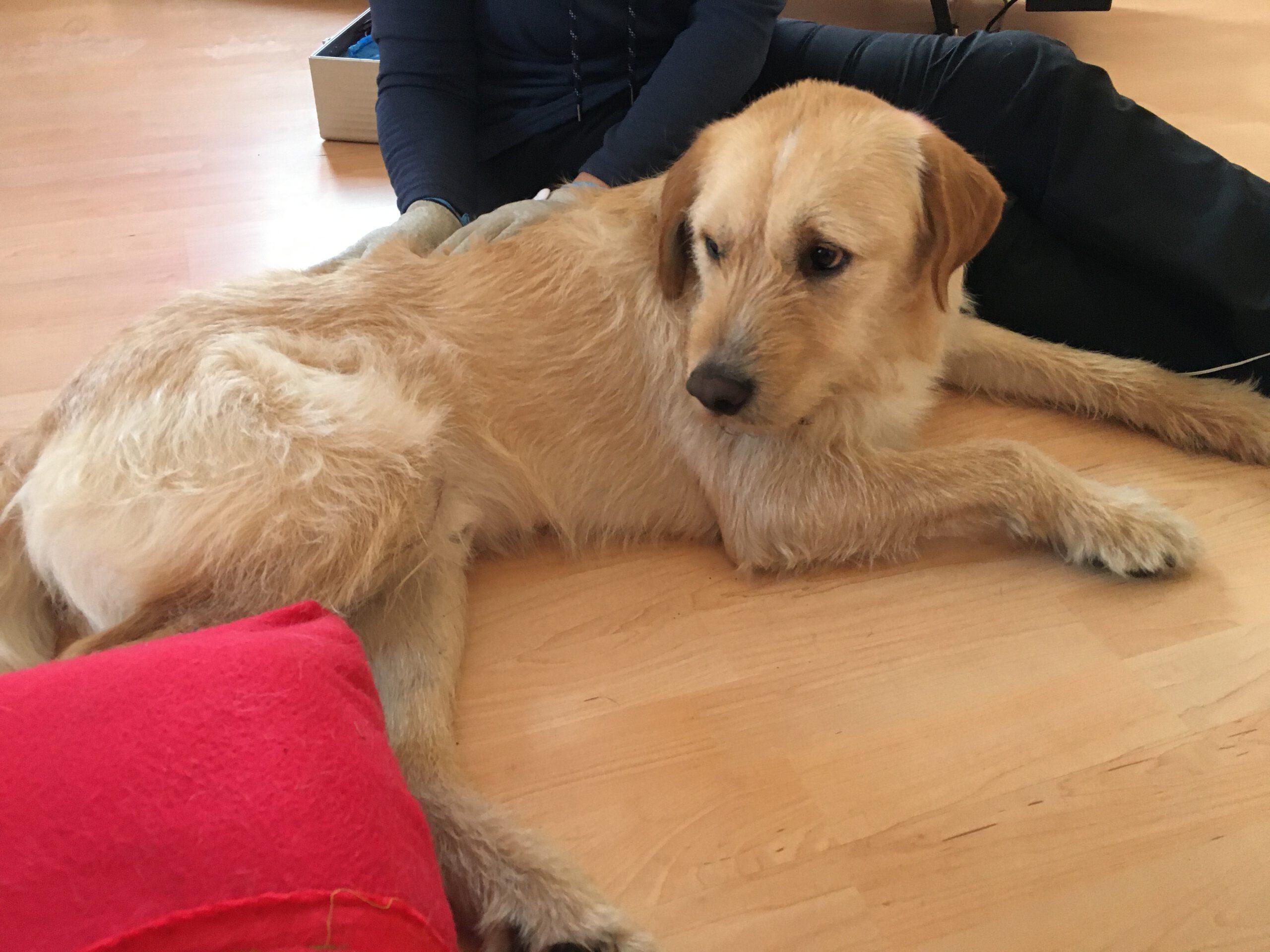 Hundephysiotherapie mit Frauchen Zauberhunde Wilsdruff Tierheilpraxis 2