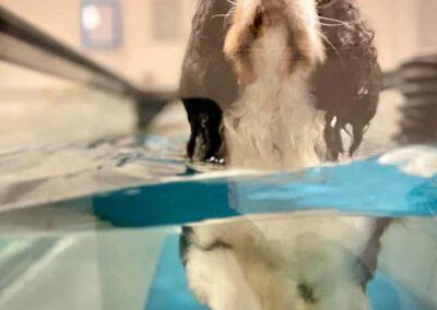 Unterwasserlaufband für Hunde Hundephysiotherapie Zauberhunde Wilsdruff 3