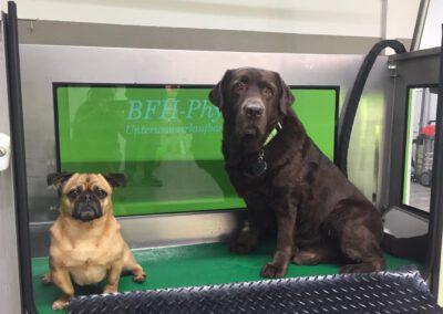 Unterwasserlaufband für Hunde Hundephysiotherapie Zauberhunde Wilsdruff 4