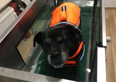 Unterwasserlaufband Happy Hundephysio Tierheilpraxis Zauberhunde Dresden