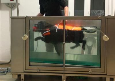 Schwimmen im UnterwasserlaufbandHundephysio Tierheilpraxis Zauberhunde Dresden