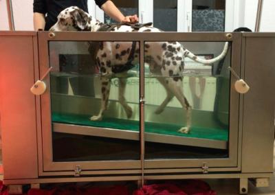 Laufen im UnterwasserlaufbandHundephysio Tierheilpraxis Zauberhunde Dresden