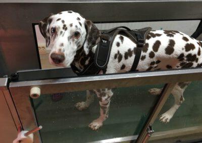Unterwasserlaufband Lucky Hund Hundephysio Tierheilpraxis Zauberhunde Dresden