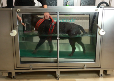 Unterwasserlaufband Happy 2 Hundephysio Tierheilpraxis Zauberhunde Dresden