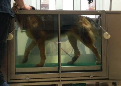 Unterwasserlaufband Muskelaufbau Hundephysio Tierheilpraxis Zauberhunde Dresden