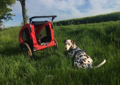 Jogger Buggy für Hunde Hundephysio Hundewagen Tierorthopädie
