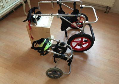 Rollstuhl für Hunde Leihrolli Zauberhunde Wilsdruff