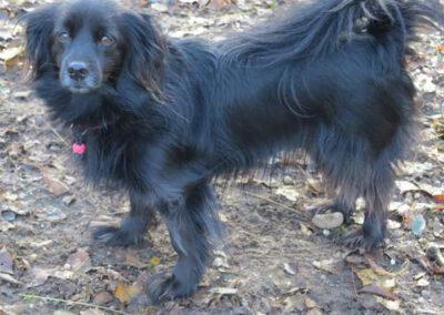 Durchtrittigkeit beim Hund Hundephysiotherapie Zauberhunde Wilsdruff 2