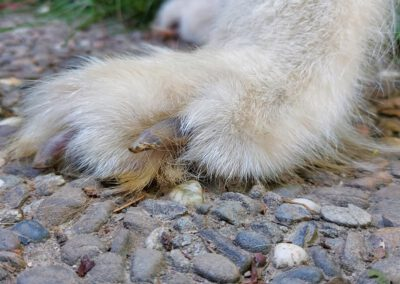 Durchtrittige Hundepfote Hundephysio Tierorthopädie Zauberhunde Wilsdruff