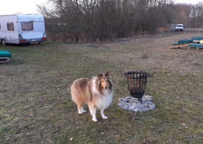 Durchtrittige Hundepfoten Hypermobilität Hundephysio Tierorthopädie Wilsdruff