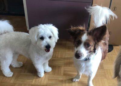 Durchtrittigkeit beim Hund Hypermobilität Hundephysiotherapie Wilsdruff