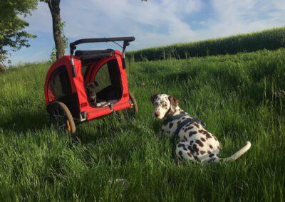 Hunde Buggy Fachberatung für tierorthopädische Hilfsmittel Hundephysio Zauberhunde
