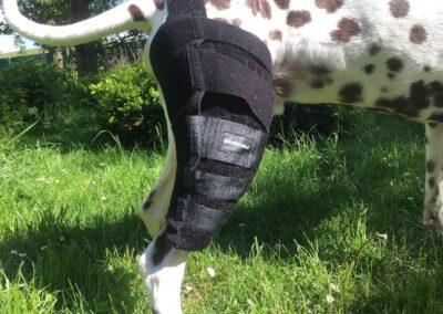 maßgefertigte Kniebandage Benecura Hundephysio Zauberhunde Dresden